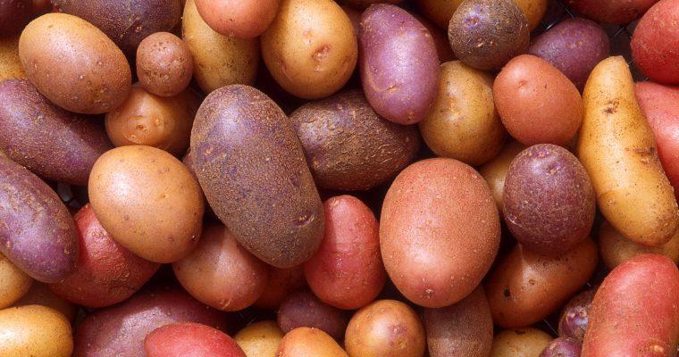 İrlanda'nın Patatesleri